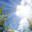 Stock Photo: View on sky out of grass