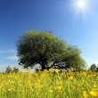 Strange tree and buttercups — Stock Photo
