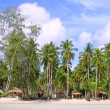 Huts and Coconut palms - Stock Photo