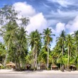 Stock Photo: Huts and Coconut palms