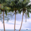 Coconut Palms on the beach — Stock Photo