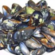 Close-up opened boiled mussels — Stock Photo