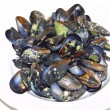 Opened boiled mussels on a plate - Stock Photo