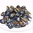 Opened boiled mussels on a plate — Stock Photo