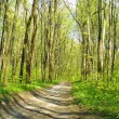 Spring forest — Stock Photo #1119595