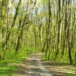 Spring forest — Stock Photo #1119610