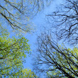 Trees in spring forest — Stock Photo #1119614