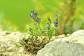 Flowers among grey stones — Stock Photo