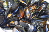 Opened boiled mussels — Stock Photo