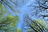Trees in spring forest — Stock Photo