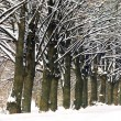 Frozen trees in winter — Stock Photo