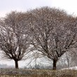 Frozen trees in winter — Lizenzfreies Foto