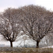 Frozen trees in winter — Stok fotoğraf