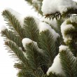 Snowy fir-tree branches in winter — Stock Photo