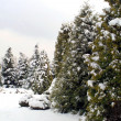 Snowy fir-trees in winter — Stock Photo #1127083