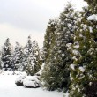Snowy fir-trees in winter — Stock Photo