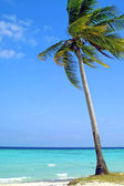 Coconut palm on the beach — Stock Photo