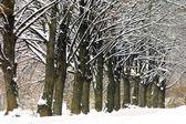 Frozen trees in winter — Stock Photo