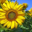 Stock Photo: Fractal image with sunflowers