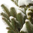 Snowy fir-tree branches — Stock Photo