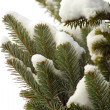 Stock Photo: Snowy fir-tree branches