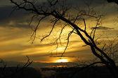 Günbatımı ağaç dalları ile — Stok fotoğraf