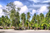 Huts and Coconut palms — Stock Photo