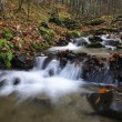 Stock Photo: River in autumnal forest