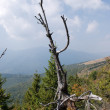 Dead wood high up in the mountains - 图库照片