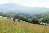 Field in mountains — Stock Photo