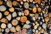 Bois de chauffage — Photo