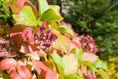 Autumnal leafs — Stock Photo