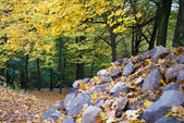 Autumnal forest with stones — Stock Photo
