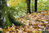 Autumnal Moss — Stock Photo