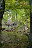 Bladverliezende wouden — Stockfoto