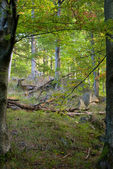 Deciduous forest — Stock Photo