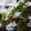 Royalty-Free Stock Photo: Moss under the snow
