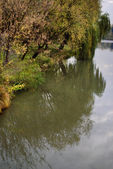 Autumnal forest and river — Stock Photo