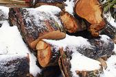 Wood under the snow — Stock Photo