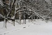 Vinterträd — Stockfoto
