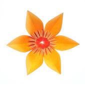 折り紙の花 — ストック写真