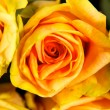 Bright yellow roses — Stock Photo #1099290