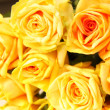 Stock Photo: Bright yellow roses