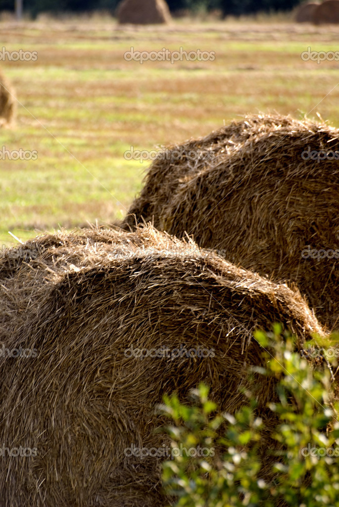 Haystack — Stock Photo #1334832