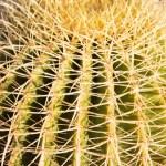 Постер, плакат: Cactus cacti