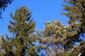 красивые зимние лесной пейзаж — Стоковое фото