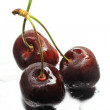 Three ripe sweet cherries — Stock Photo