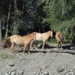 Horses — Stock Photo #1137106