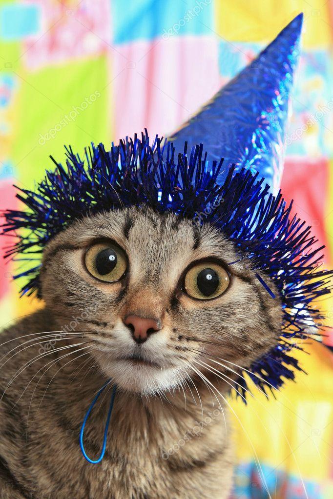 Cat ridicule par un chapeau de fête. une panique et la confusion \u2014 Image de krugloff