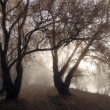 Contours of old trees in a mist — Stock Photo